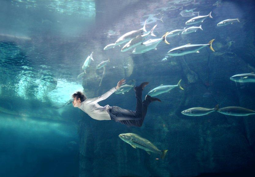 pesce più veloce